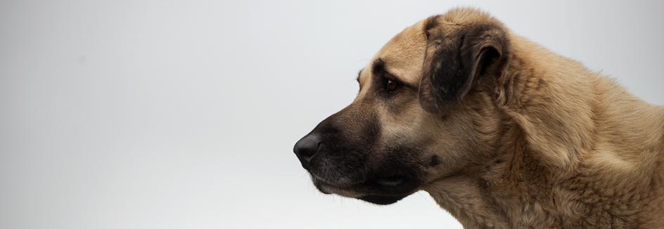 Tierheim Mainz ǀ Tierschutzverein